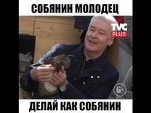 Собянин взял собаку из приюта