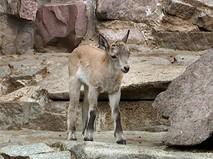 Дагестанский тур в зоопарке