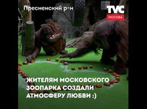 Праздник у животных