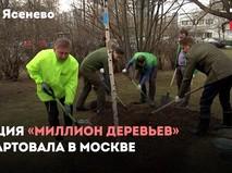 """Акция """"Миллион деревьев"""""""