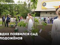 Первые деревья появились в Саду молодожёнов на ВДНХ