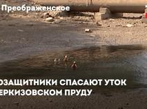 В Черкизовском парке спасают уток