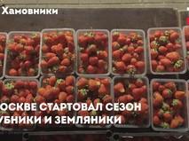 Сезон клубники в Москве