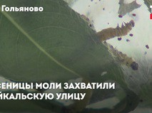 Гусеницы захватывают Байкальскую улицу
