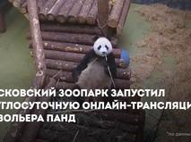 Как живут панды в зоопарке