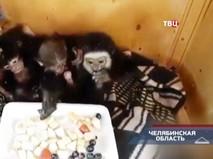 """""""Петровка, 38"""". Эфир от 19.07.2019 03:45"""