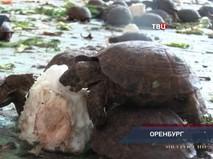 """""""Петровка, 38"""". Эфир от 27.08.2019 00:35"""