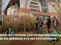 Озеленение СВАО