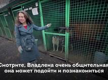 Как выглядят приюты для собак в Москве