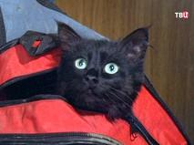"""241 выпуск. """"Чёрная кошка"""". """"О братьях наших меньших"""". """"Скамейка"""""""