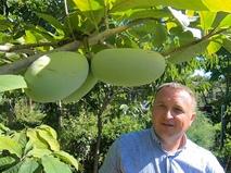 Выращивание азимины в Крыму