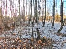Спасение залитого бетоном леса