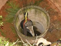 Спасение слона из колодца