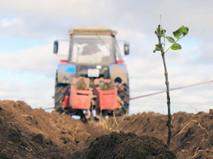 """Высадка деревьев в рамках акции """"Сохраним лес"""" в Крыму"""