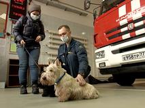 Спасенные собаки
