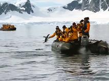 Пингвин запрыгнул в лодку с туристами
