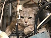 Кот, застрявший в электрощитке