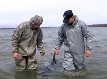 Специалисты спасают дельфина