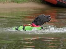 Собака водолаз