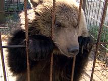 Медвежонок в клетке