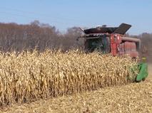 Сбор кукурузы