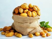Золотая картошка