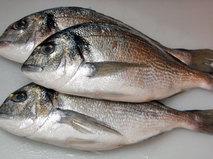 Без обмана. Какую рыбу мы едим