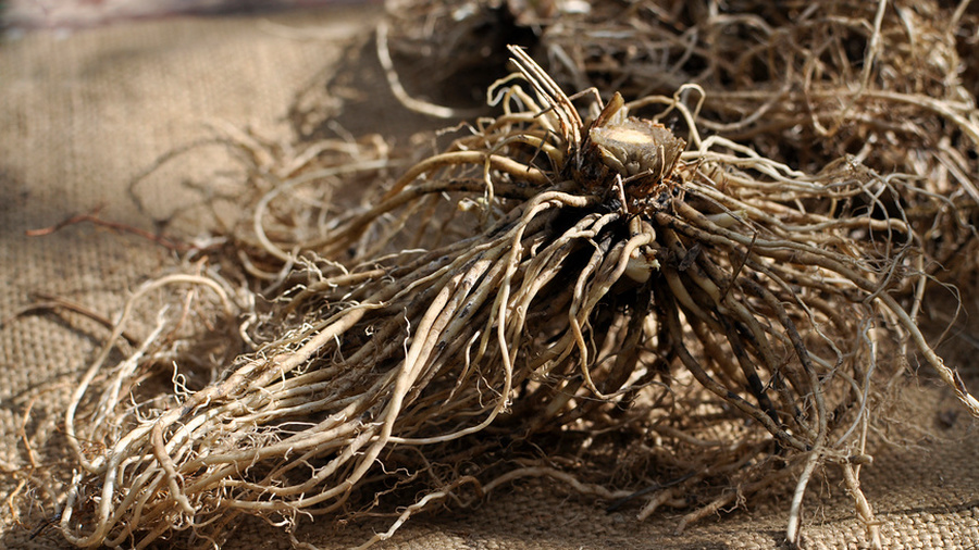 Лечебные травы корни картинки