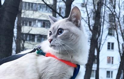 Россиянами запретят держать много питомцев в доме