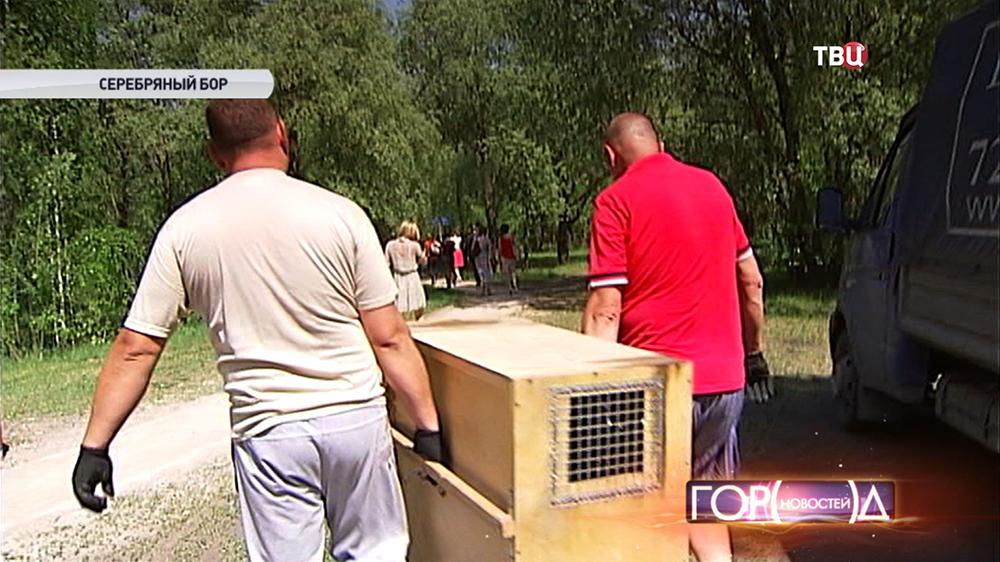 В птичий питомник в Серебряном Бору привезли пополнение