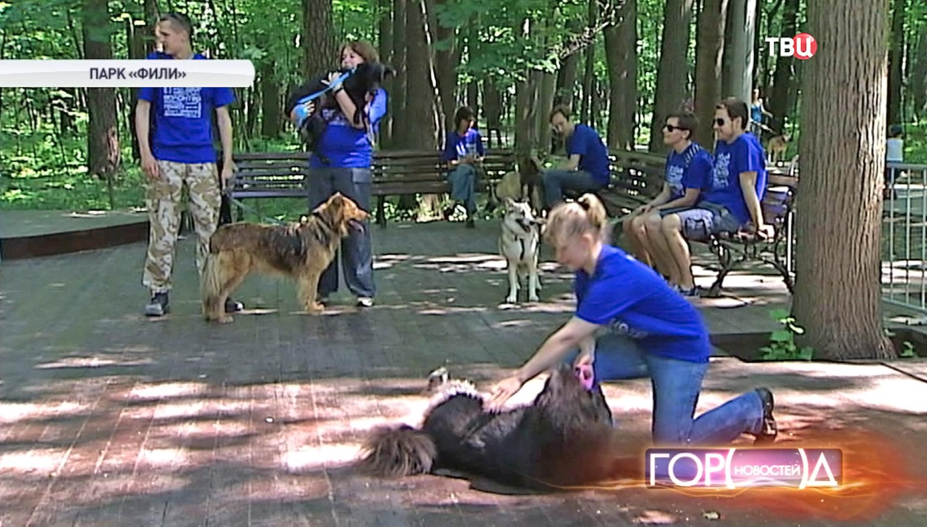 """Выставка собак из приюта в парке """"Фили"""""""