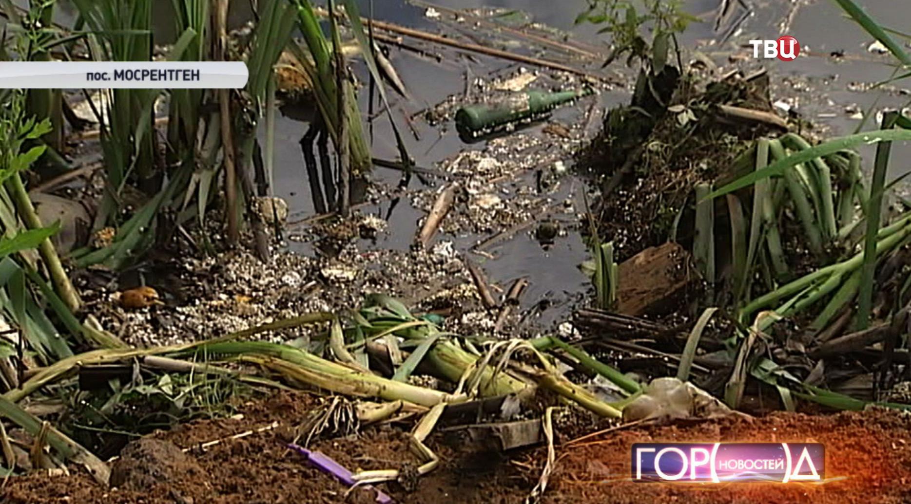 Загрязненный пруд