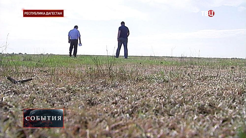 Дагестанский фермеры в поле