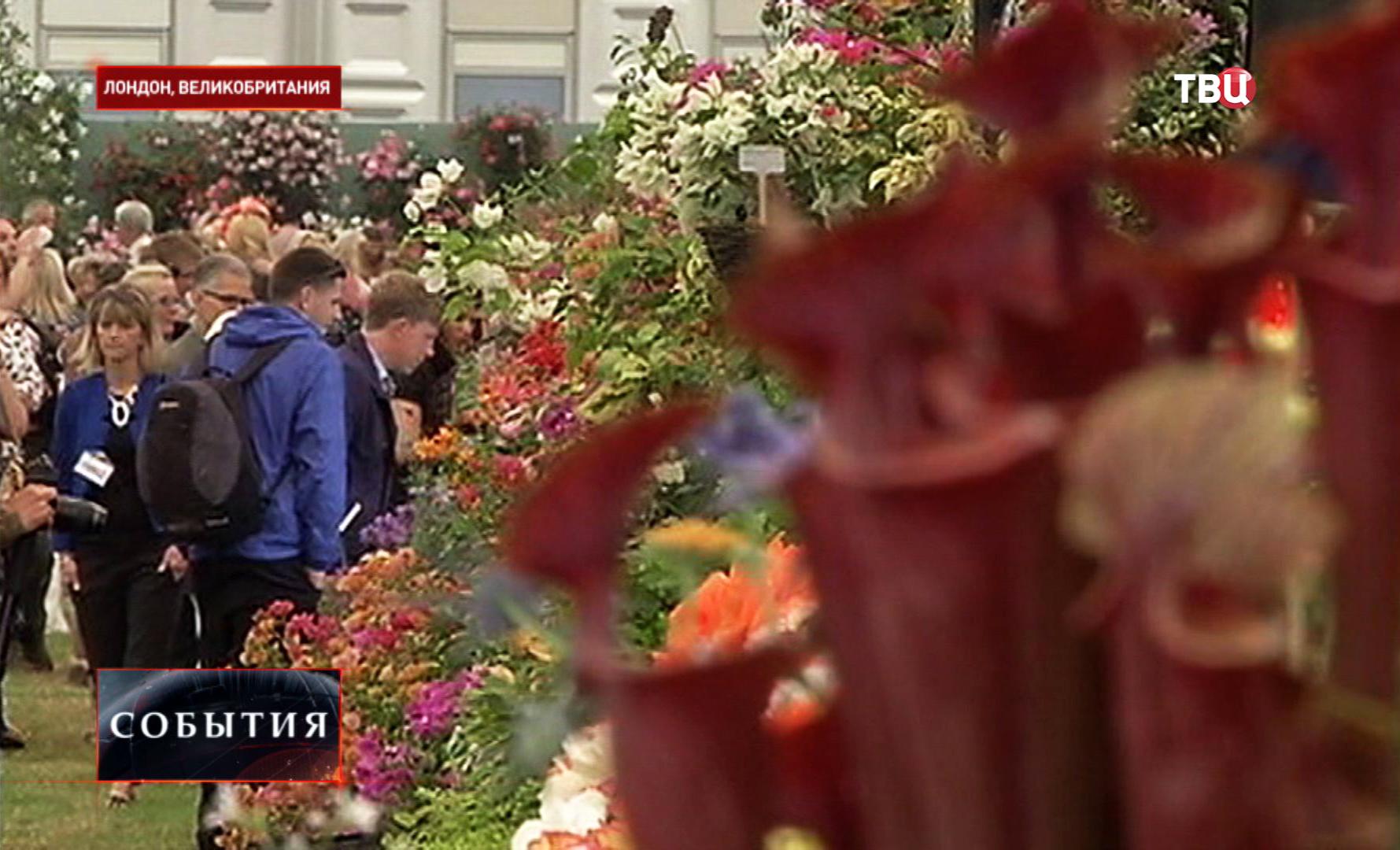 Выставка цветов в Хэмптон-корте