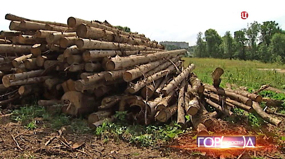 Сваленные бревна в Домодедовском районе