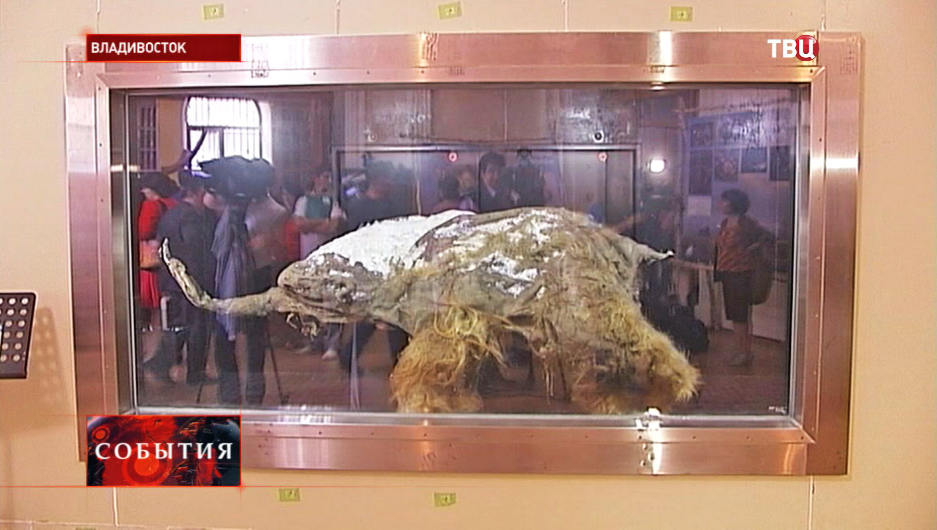 Мамонтенок Юка на выставке во Владивостоке