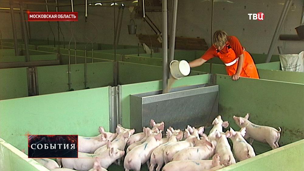 Подмосковная свиноферма