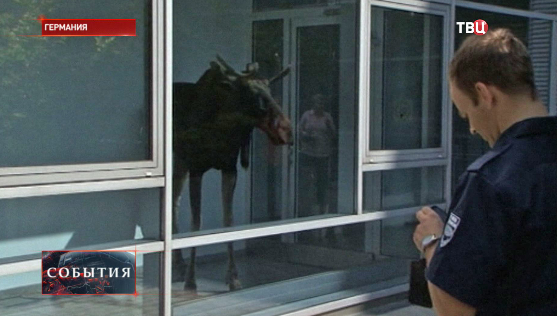 Лось ворвался в офис одной из фирм в Дрездене