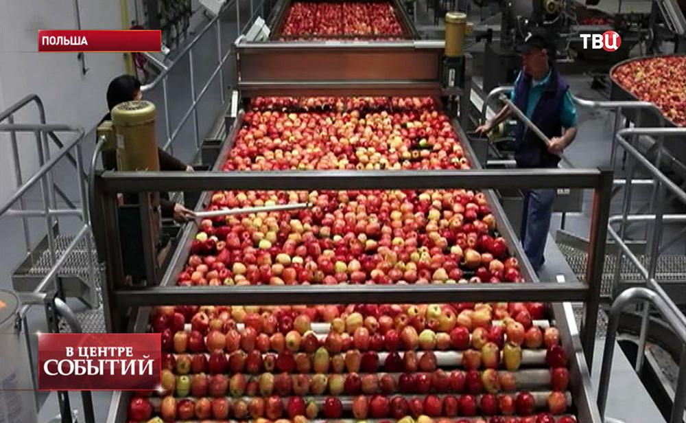 Урожай яблок в Польше