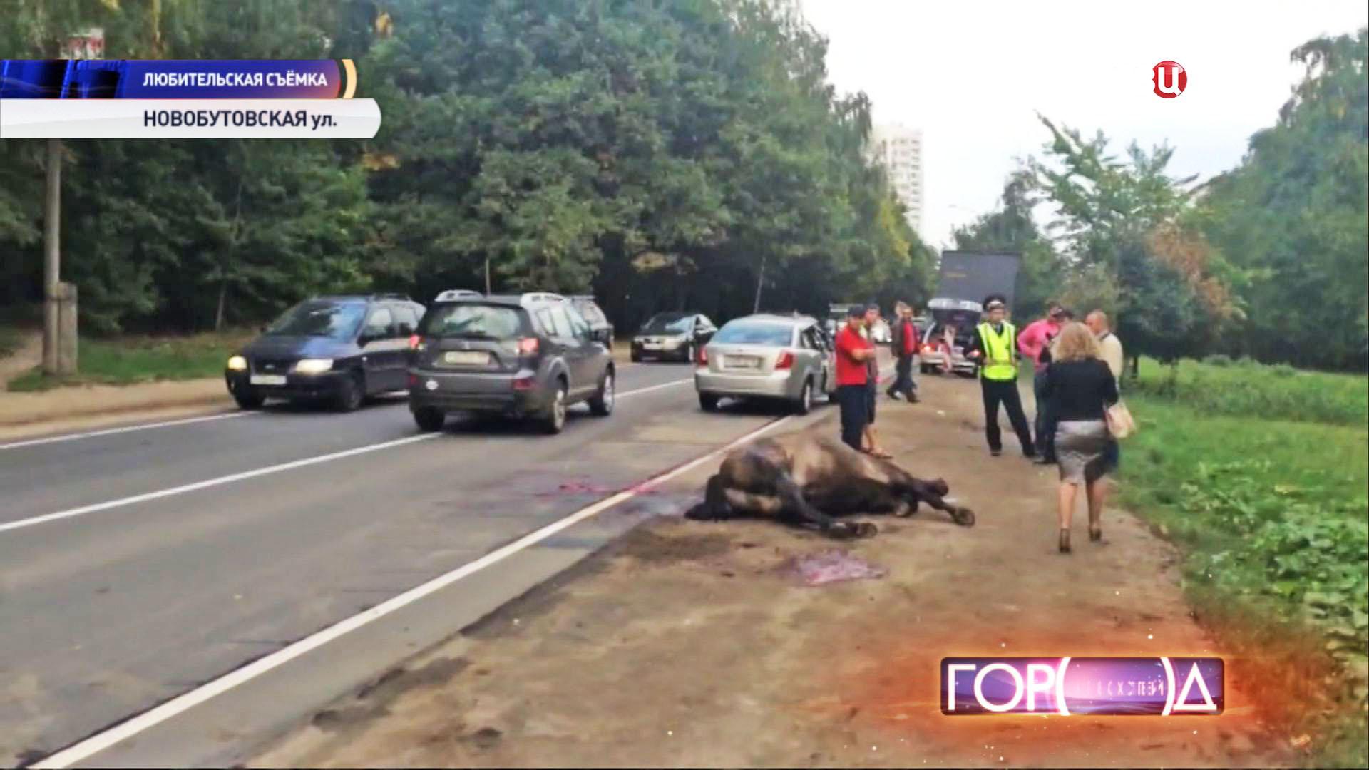 Сбитая лошадь на обочине дороги