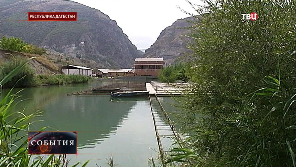 Рыборазводное хозяйство в Дагестане