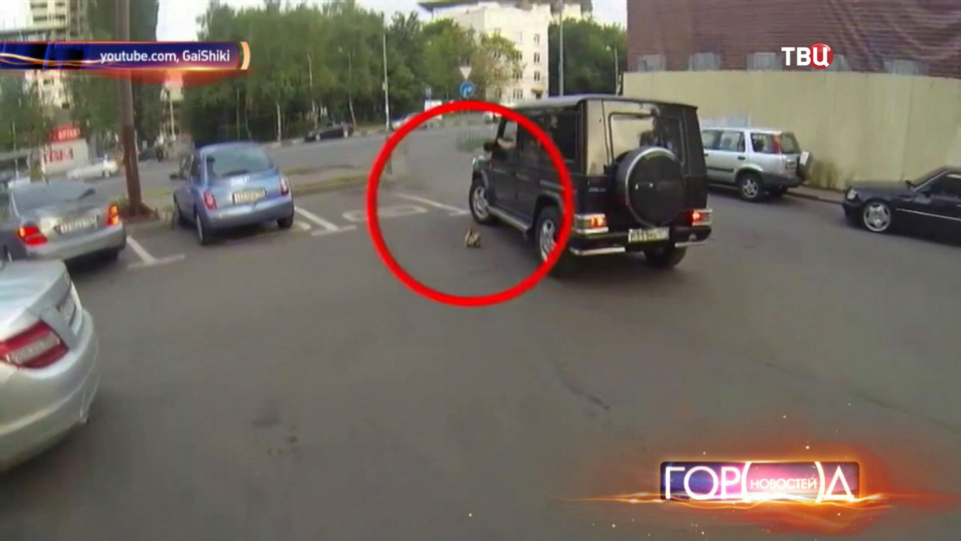 Водитель выбрасывает мусор на дорогу