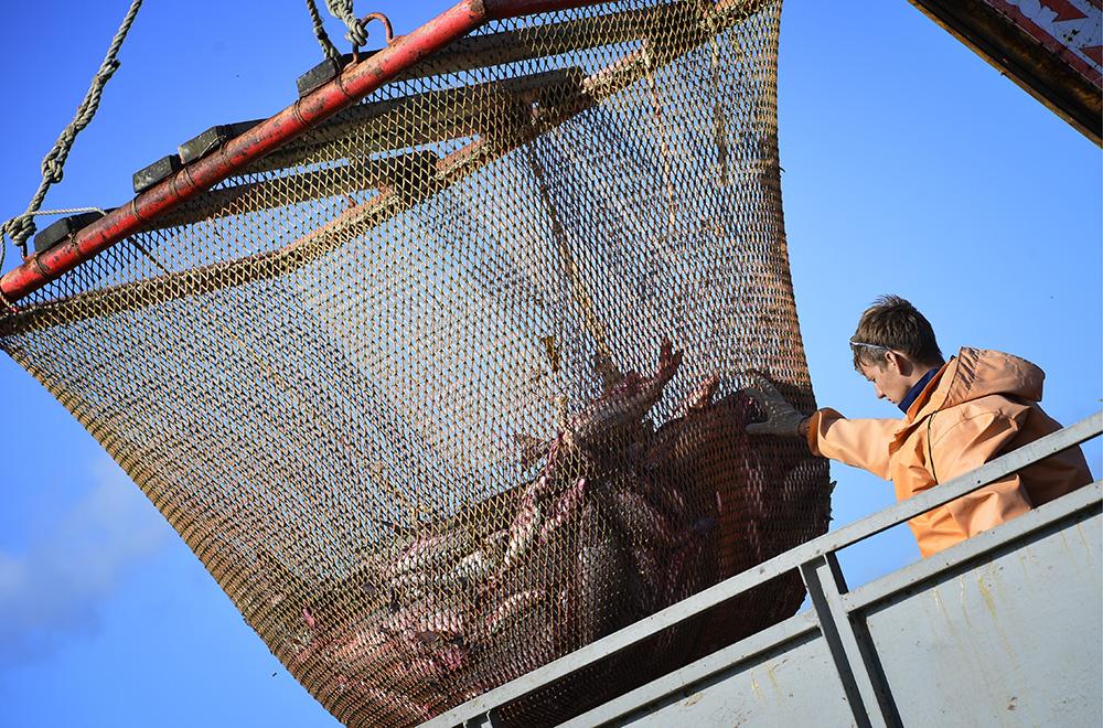 Добыча и переработка рыбы