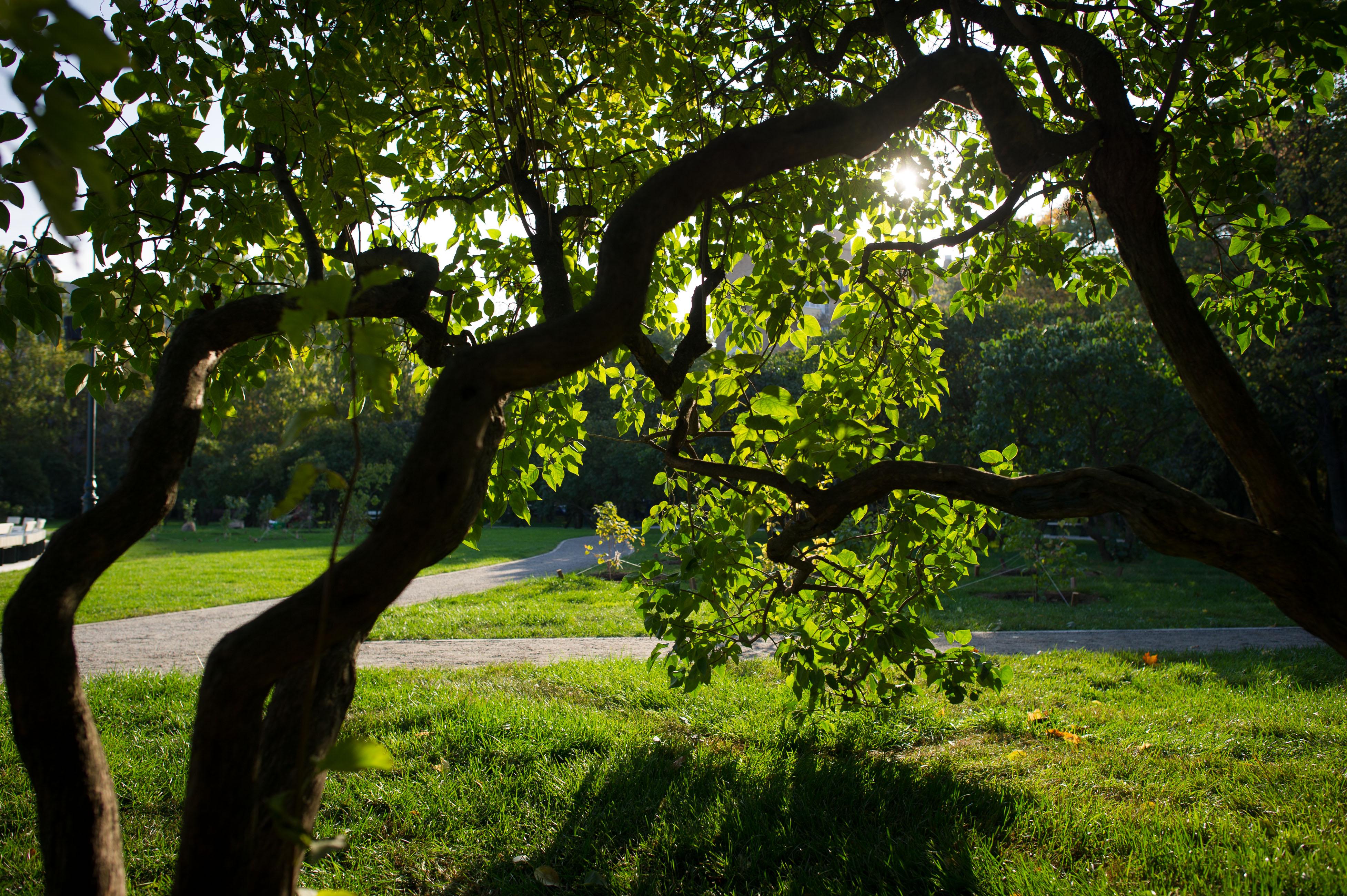 Парк «Сиреневый сад»