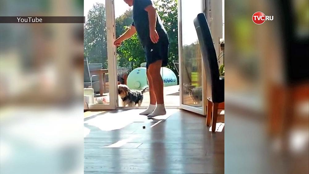 Собака-скептик из США ждёт пока ей откроют дверь