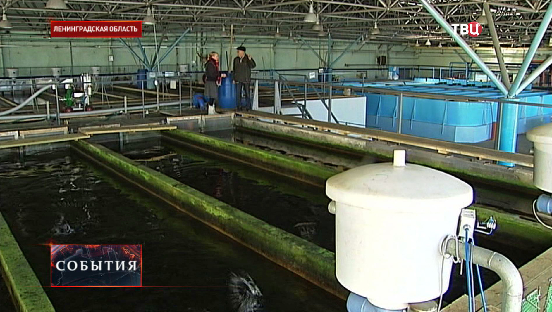 Бассейн с рыбой в Ленинградской области