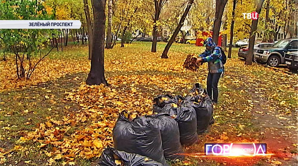 Экологи разбасывают собранную листву