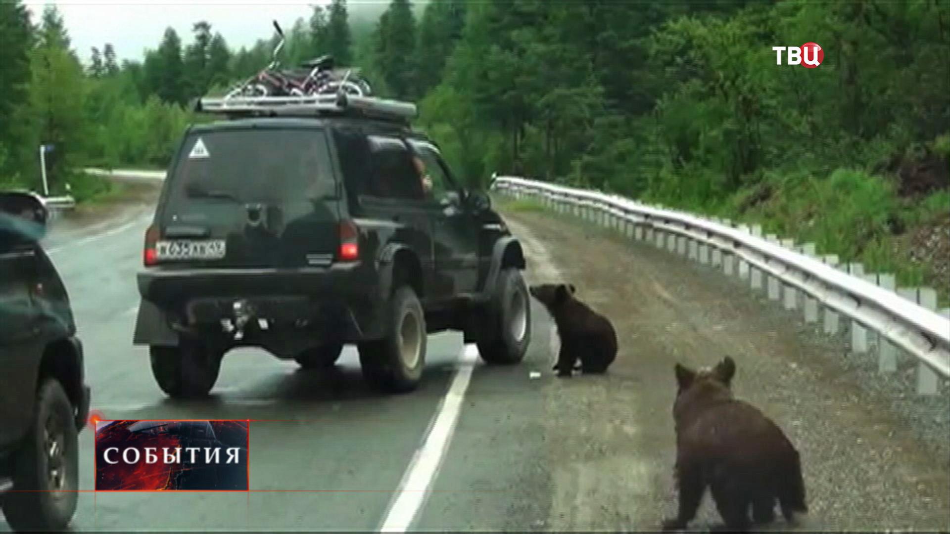 Медведи просят еду у туристов