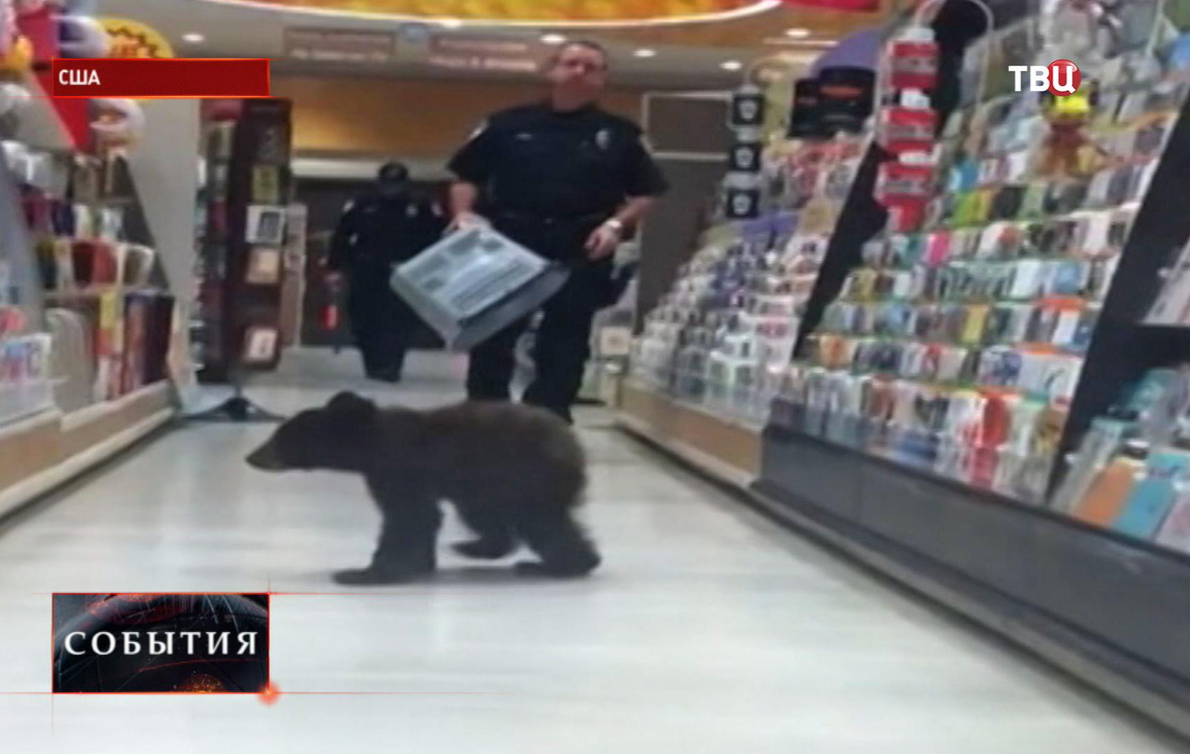 Медвежонок забрался в супермаркет