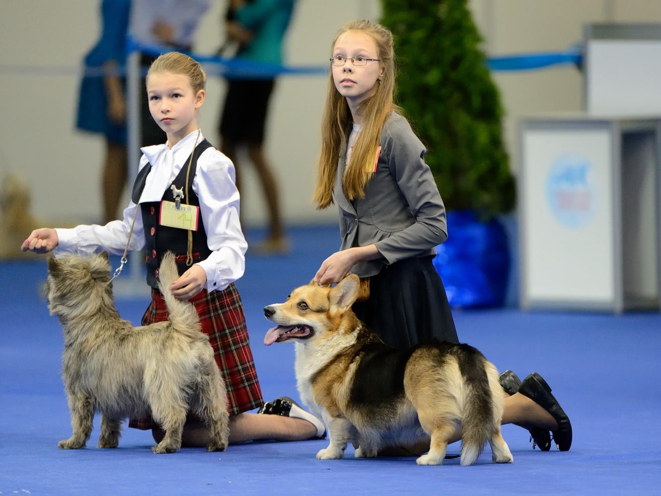 Участники интернациональной выставки собак